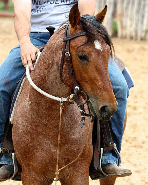 Quarter Horses For Sale In Texas With Photos