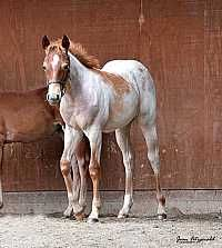 Bet Hesa Cat x <br>Smart Lil Lucille Filly