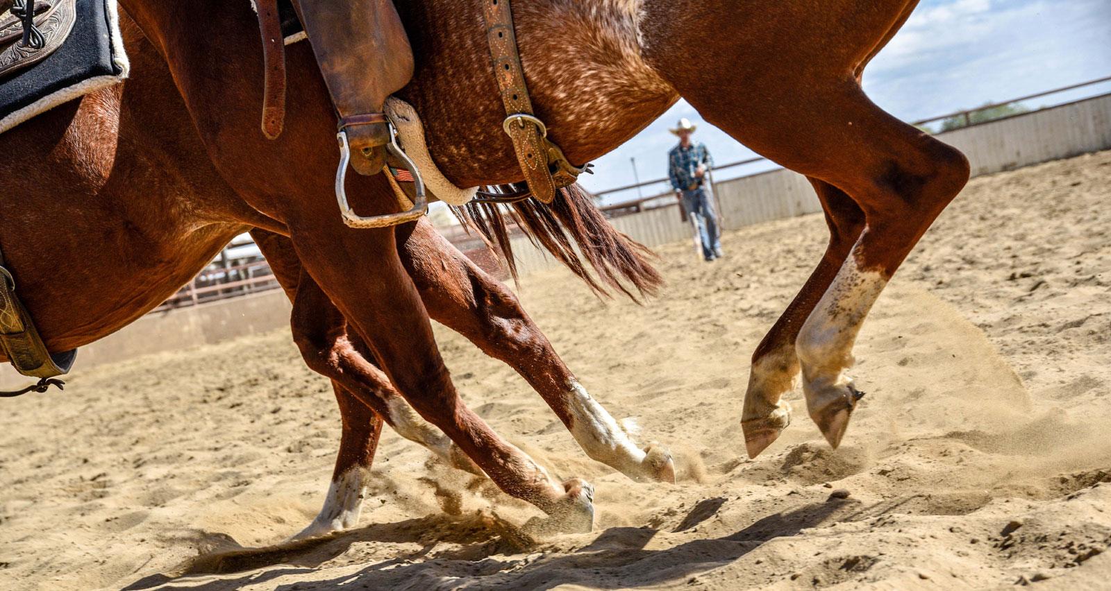 Carol Ward Cutting Horses